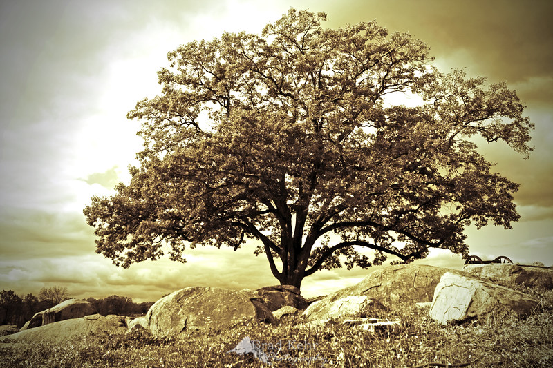 The Lone Tree - Devil's Den - Gettysburg National Battlefield - Gettysburg, Pennsylvania.