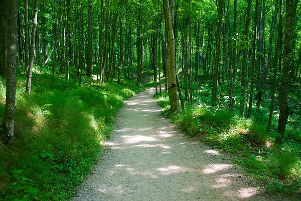 Trail to Miner's Falls