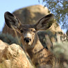 2 april 2012 , 8h00am , deer (secret spot)
