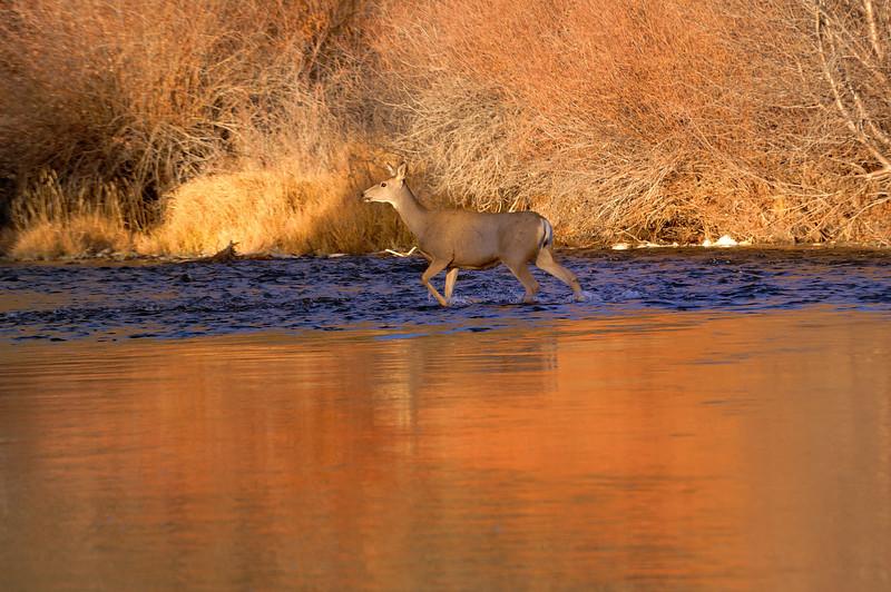 21 October 2012    ( 8h 04mn 21 s  AM )  Morning deer