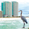 A Great Blue Heron on Four Seasons Pier looking at Turquoise Towers.