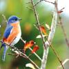 Don Saarie Bird 2