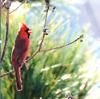 Don Saarie Bird 1