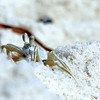 The little ghost crabs are so fun to watch while sitting on<br /> the beach,'' writes Cathy Deal of Innerarity Point.