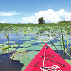 John Henderson of Fairhope shares a picture of lotus in bloom in the Tensaw Delta.