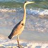 Heron protecting Orange Beach,'' writes Marlena Kee.