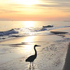 """Traci Rowland  shares a picture of her """"sunset walking buddy."""""""