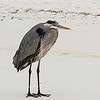 Heron in early morning fog from Barb Borsberry.