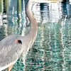"""This lil' guy greeted us as we were walking around Orange Beach Marina,'' writes Jodi Hoover from Indiana."
