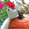 Halloween Albino Squirrel