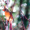 Don Saarie Bird 3