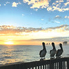 Courtney Faine with three new friends at Gulf State Park Pier.