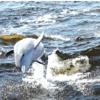 Don Saarie Dolphins