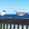 Debating gulls from Marissa Alexander