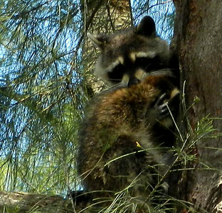 05-25-12 A subservient youngster decides to trust Mom during his high tree rescue.
