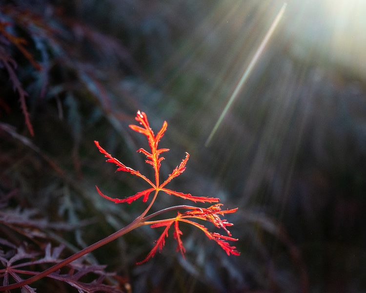 November - Shine on