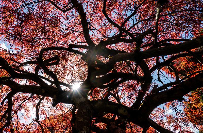 October - Tree of Life