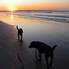 November 22 2009 - Early morning walk with Moki and Java on second beach. very cold, but beautiful sunrise