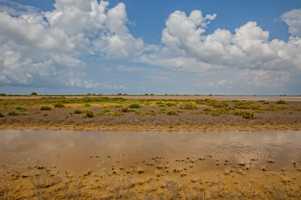 The colors of the Camargue