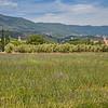 Lavender field near Cucuron