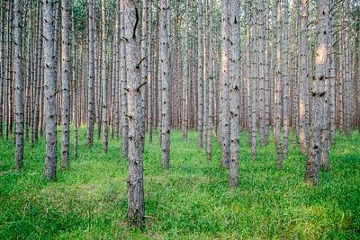 Trees in Green Carpet