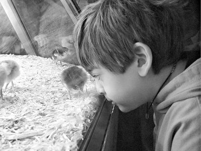 At the Museum of Science and Industry - Jacob was fascinated by hatching chicks