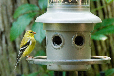 The first bird I saw on our new(ish) bird feeder