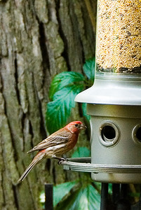Second bird