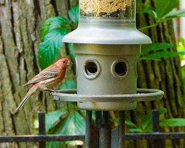 We installed a new bird feeder