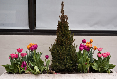 Some plantings looked spring-like.