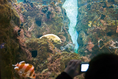 Next morning we went to the aquarium - Jacob is at the bottom right photographing an eel.