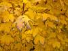 05-Fall-2009-10-28(13.59)_1000359