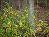 11-Fall-2009-10-28(14.36)_1000381
