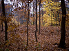 09-Fall-2009-10-28(14.21)_1000367