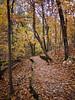10-Fall-2009-10-28(14.33)_1000379