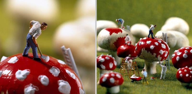 Dotting mushrooms