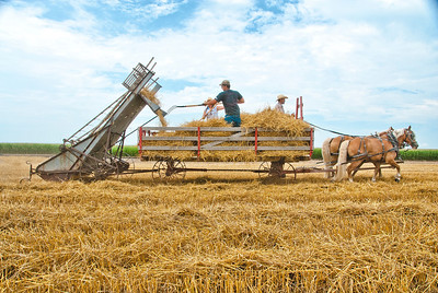 Loose Hay Loading_MLD7991 Spice