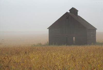 A lone corn crib in the middle of an Iowa soybean field seems very remote on a foggy fall morning.