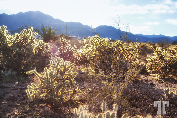 High desert plants