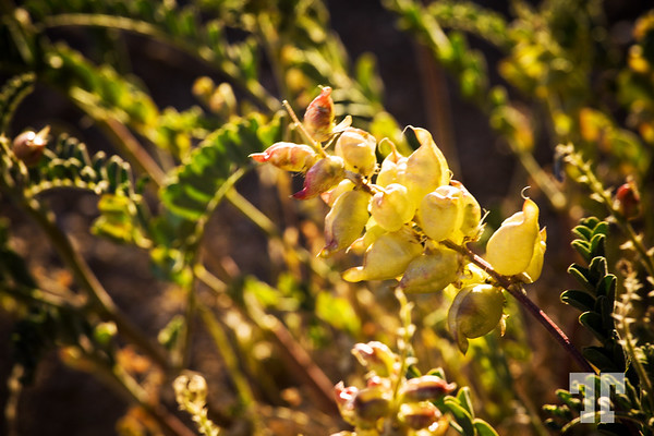 weeds-in-sunlight-7