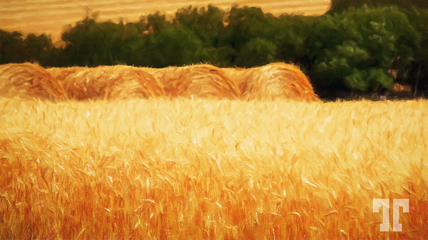 harvest-idaho-cropped2-paint-mod2