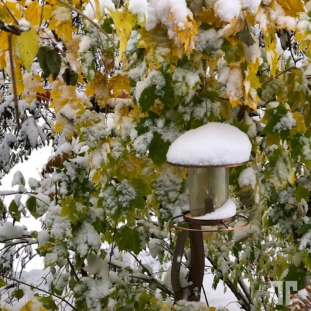 Snow covered vegetation and bird feeder at Bigfork, Montana in the month of October