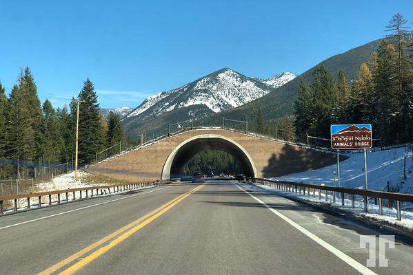 Animal bridge in Missoula area, Montana