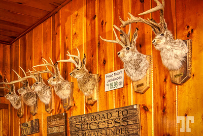 jackalopes-trophies-wall-s dakota-AU