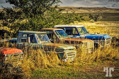 Rusty old trucks in Quinn Town - Pennington County, South Dakota  (ZZ)