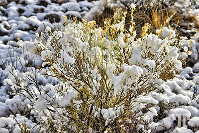 sagebrush-snow-utah-hwy24-13-1-bf copy