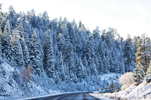 Mahleur National Forest covered with snow - Oregon Hwy 95 to Nevada
