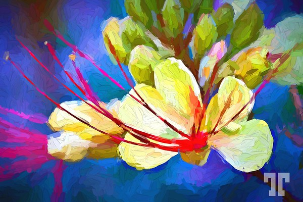 spring-flowers-mojave-desert-10-painting-BIG