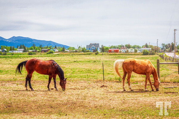 Wyoming-village-horses