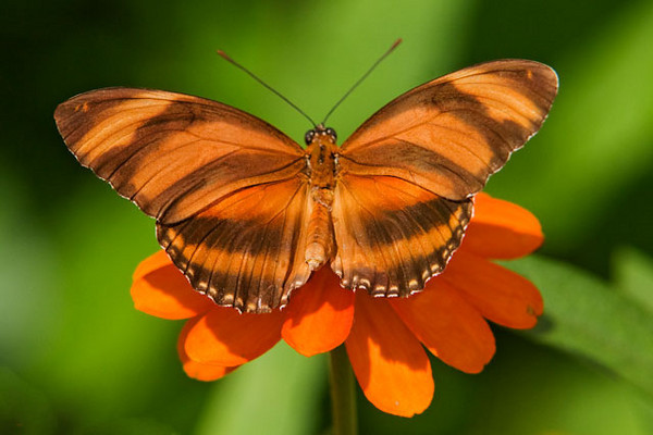 I really like the way the colors in this butterfly match the color of the flower.